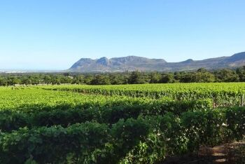 Groot Constantia vineyard, towards the coast at Muizenberg, Cape Town\'s Southern Suburbs, Western Cape